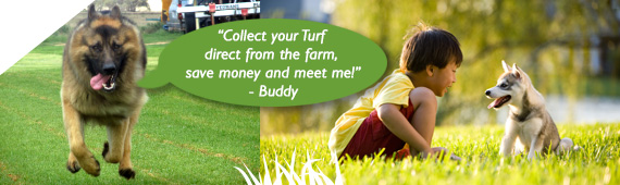 Order instant turf