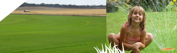 Roll-out turf - Turf Varieties